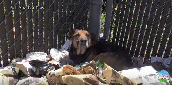 ゴミだまりに丸まった犬