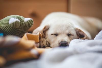 うつ伏せで寝ている犬