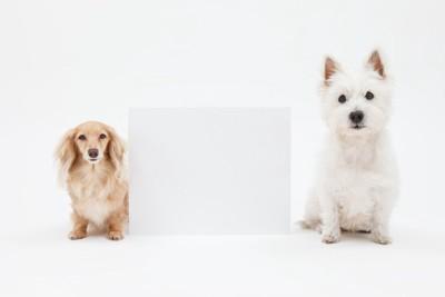 距離のある犬