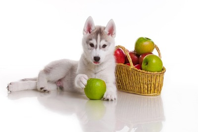 りんごを触る子犬