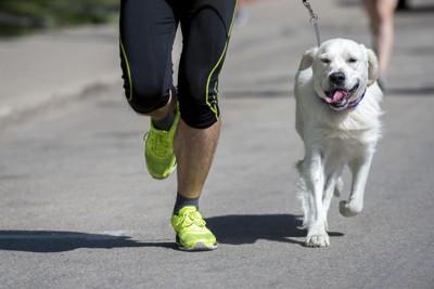 ランナーといっしょに走る犬
