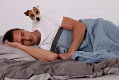 眠っている男性のそばにいるジャックラッセルテリア