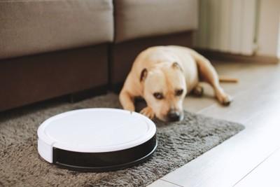白いロボット掃除機と背後に犬