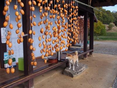 吊るし柿と柴犬