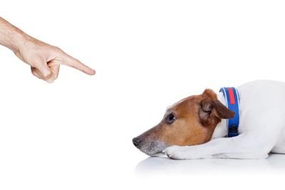 叱られて伏せている犬