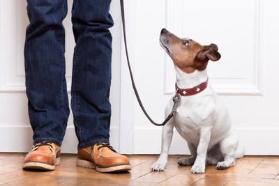 男性を見上げる犬