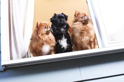 窓から外を眺める三頭の犬