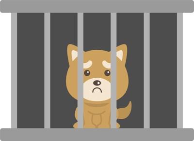 茶色の収容犬