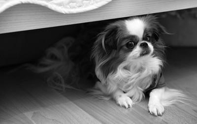 ベッドの下にいる犬