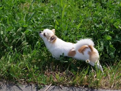 草に顔を寄せる犬