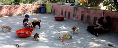 シェルター内の犬達
