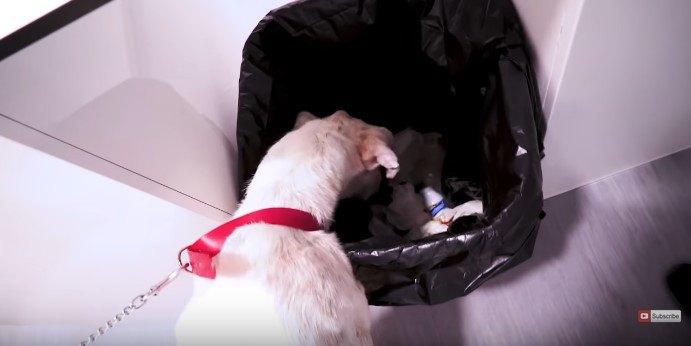 ゴミ箱をあさる犬