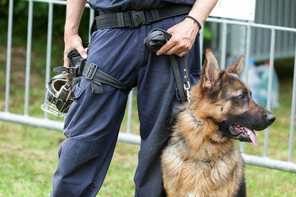 トレーニング中の犬と男性