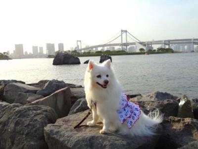 レインボーブリッジと犬