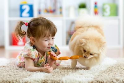少女と遊ぶポメラニアン