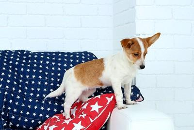 ソファーからジャンプしようとしている犬