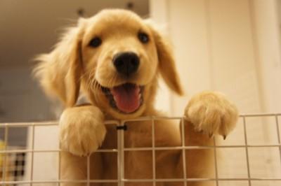 こっち見て~とアピールしている愛犬