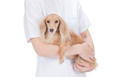獣医さんに抱っこされる犬