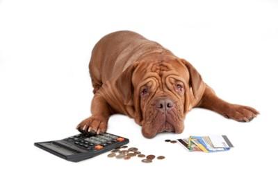 電卓をはじく犬