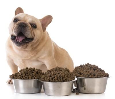 たくさんの餌に嬉しそうな犬