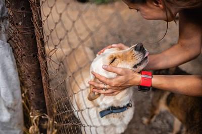 保護犬を撫でる女性
