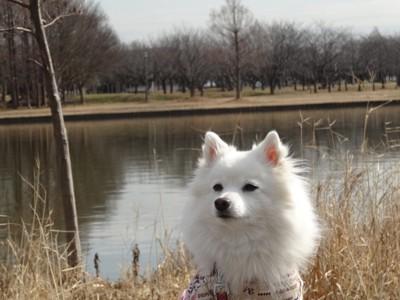 水辺の前の犬