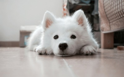 dog_slip2