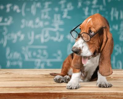 講義をするバセットハウンド犬 102267813