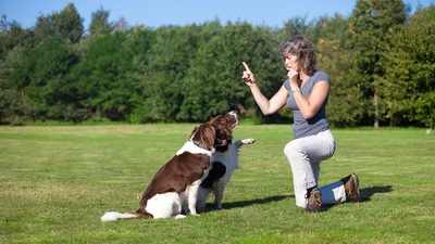 二匹の犬をトレーニング中の女性