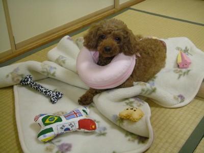 ドーナツをはめている愛犬