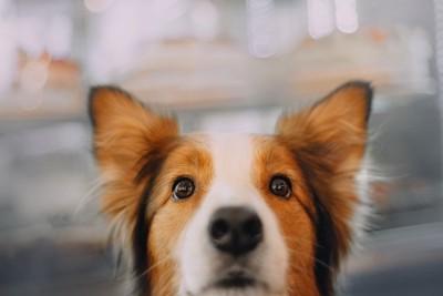 覗き込む犬