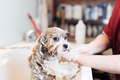 シャンプーをしてもらう犬