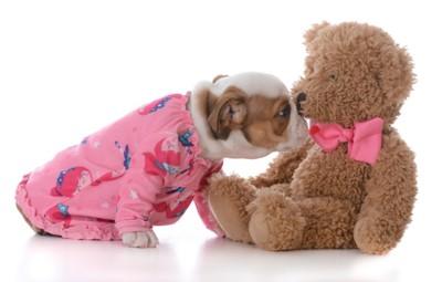 ピンクのパジャマの子犬