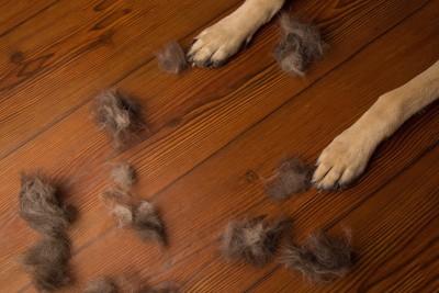 床に落ちている抜け毛と犬の足