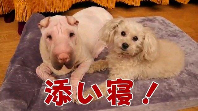 添い寝~字幕