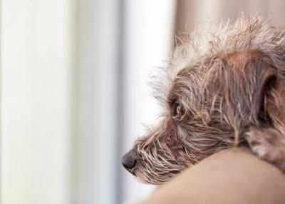 外を見つめる犬の横顔