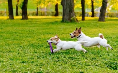 2頭の犬が横向きで走る