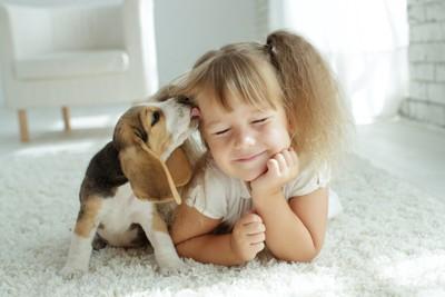 女の子の顔を舐めるビーグルの子犬