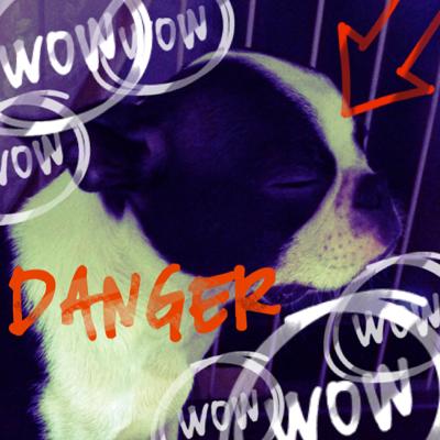 ふてくされている犬