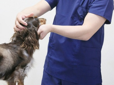 獣医師 診察 犬
