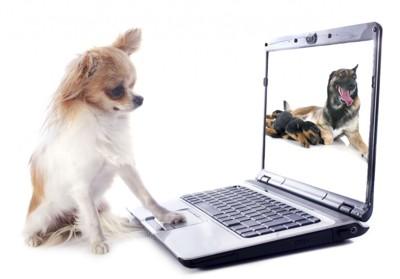 chihuahua and computer