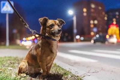 夜の街と犬