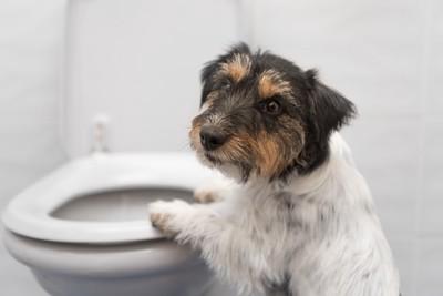 便器に手を乗せる犬