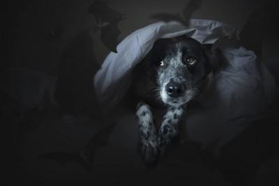 暗がりで怯える犬