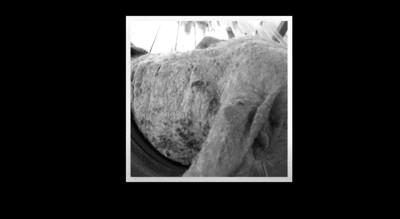 疥癬かかった犬の首