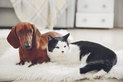 寄り添う犬と猫