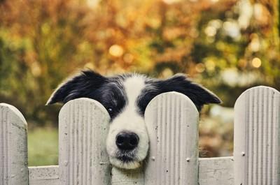 柵から鼻を出してこちらを見る犬