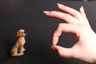 オーケーマークをする人の手と犬