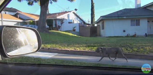犬と並走する車