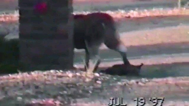 鴨から去る犬